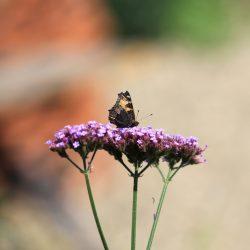 Vlinder in de tuin ROP2500x2500 kopie